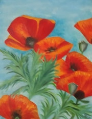 Coquelicots de mon jardin - Poppies from my garden.