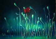 Coquelicot sur lumière bleue. Mounia Chaffai