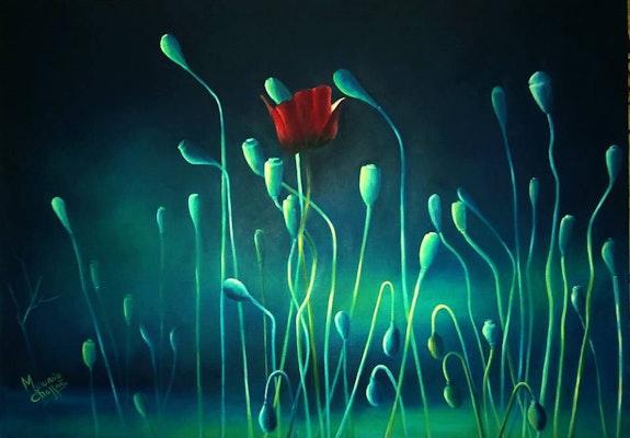 Coquelicot sur lumière bleue. Chaffai Mounia Mounia Chaffai