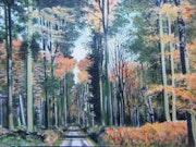 Forêt de hêtres en Normandie.