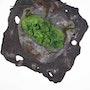 Pixie cup lichen. Erika Méan