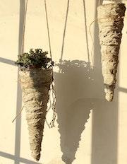 Support plante.
