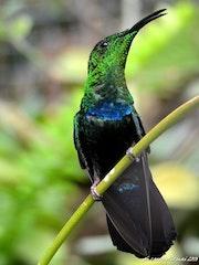 Le colibri. Philfoto