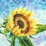 Sunflower. Alexander Chebotariov