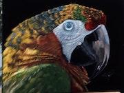 Papagay aus Uhrwald Kolumbiens.