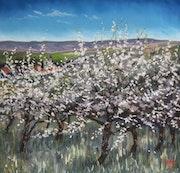 Balade en Bourgogne, les cerisiers d'Irancy..