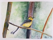 Tropical bird. Seda Porrini