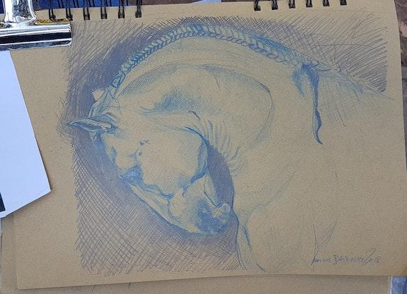 Etude cheval. François Baldinotti Forangeart F. Baldinotti Peintre De l'air