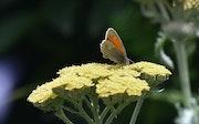 Les premiers papillons….