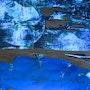 Blue moon. Jasmyn Von Müller