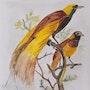 Oiseaux sur la branche. Marlène Boisson