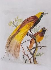 Oiseaux sur la branche.