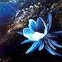 Fleur de Novalis. Isabelle Le Pors