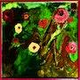 Le pouvoir des fleurs. Marie-Claude Lambert