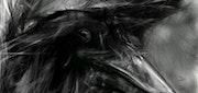 Crow. Oscar Verdura