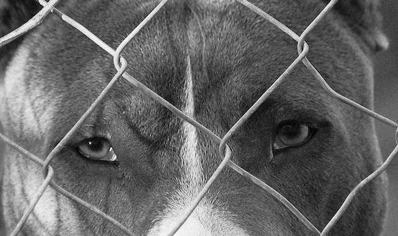 Serie: «Los Animales»..  Helena Rovira Moreno