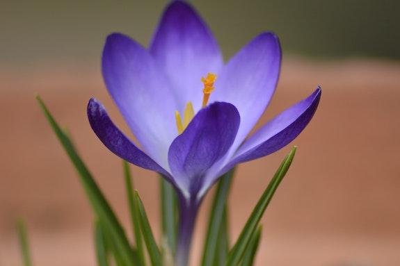 Le retour coloré du printemps. Sylvie B Mite02