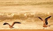Serie: «Las Aves»..