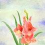 Drei Gladiolen-Blüten lachsfarben. Juste