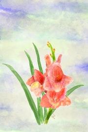 Drei Gladiolen-Blüten lachsfarben.