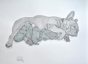 Blue french bouledogue maternity, drawing.