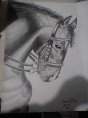 Beauty horse. Luis Covarrubias