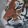 Le tigre. Catherine Lccat