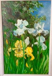 Iris germanica..