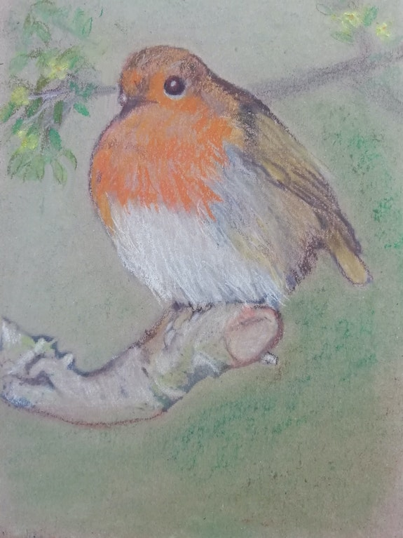 Robin on a branch. D Clayton Dawn Clayton