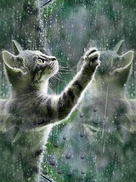 Ami du chat bonjour. Marie Carteron Marie Carteron
