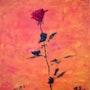 Rose rouge pour mon amour. Bernard Honig