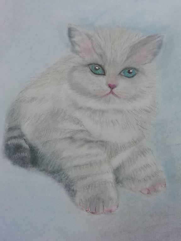 A Fluffy Kitten. D Clayton Dawn Clayton