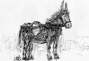 Mon ami l'âne.