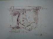 Haflinger. Bernard Honig