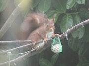 Une faim d'écureuil.