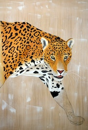 Panthera onca. Thierry Bisch