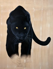 Panthera pardus melas. Thierry Bisch