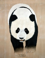 Panda géant. Thierry Bisch