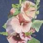 Roses trémières. Anny Burtscher-Beaudoin