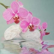 Reflets d'orchidées !.