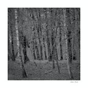 Forêt d'automne.