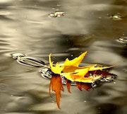 Message d'automne.