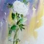 A fleur de peau…. Catherine Rey