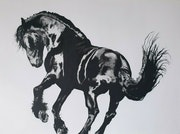 Majestic Black Stallion Horse Drawing. Adam Jagger