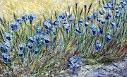 Le chemin des iris (dans le sud de la France).