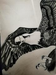 Aigle noir et blanc.