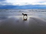 Mi perro, Xu en la playa.
