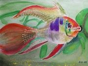 Le poisson arc en ciel.