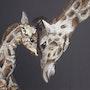 Calin de girafes. Tiffanie Daubié