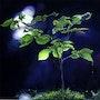 Lumière nocturne. Houmeau